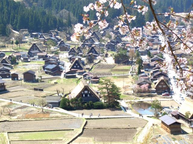 桜と白川郷