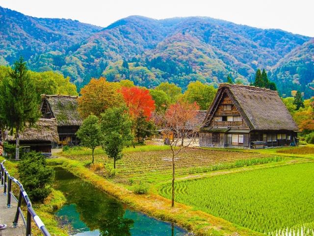 秋の白川郷の紅葉