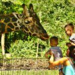 イケメンゴリラで有名な東山動植物園の観光情報【動物園編】