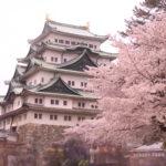 しゃちほこ!本丸御殿!見所まんさいの名古屋城の観光情報