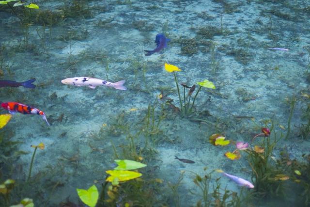 名もなき池(モネの池)